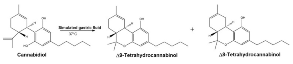 molecule graphic for Does CBD Convert to THC in the Body blog