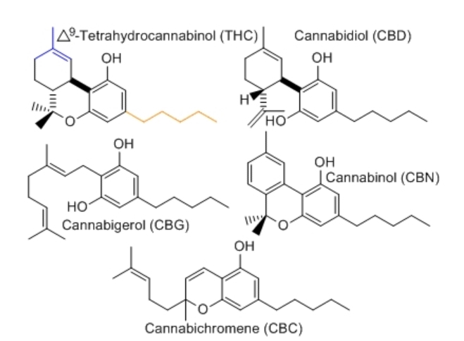 cbc molecule graphic for beyond thc & cbd blog