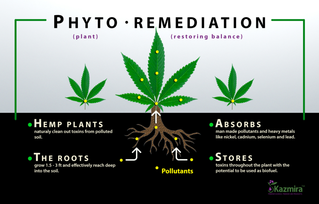 Soil Remediation with Industrial Hemp