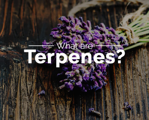What are terpenes cover